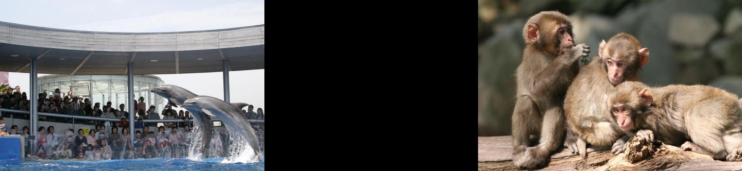 うみたまご&高崎山